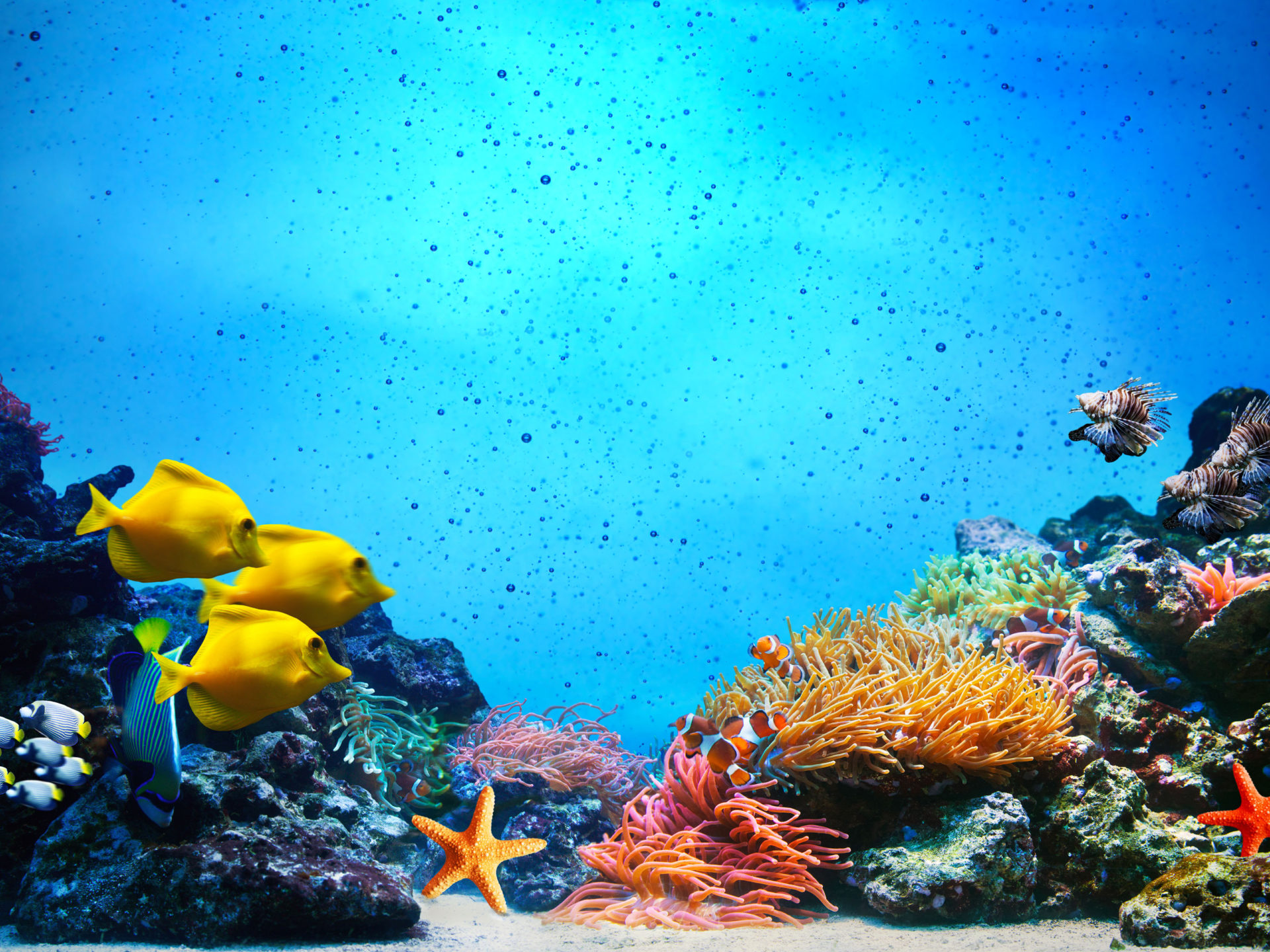 How To Use Gif As Wallpaper Iphone X Underwater Scene Coral Reef Fish Groups In Clear Ocean