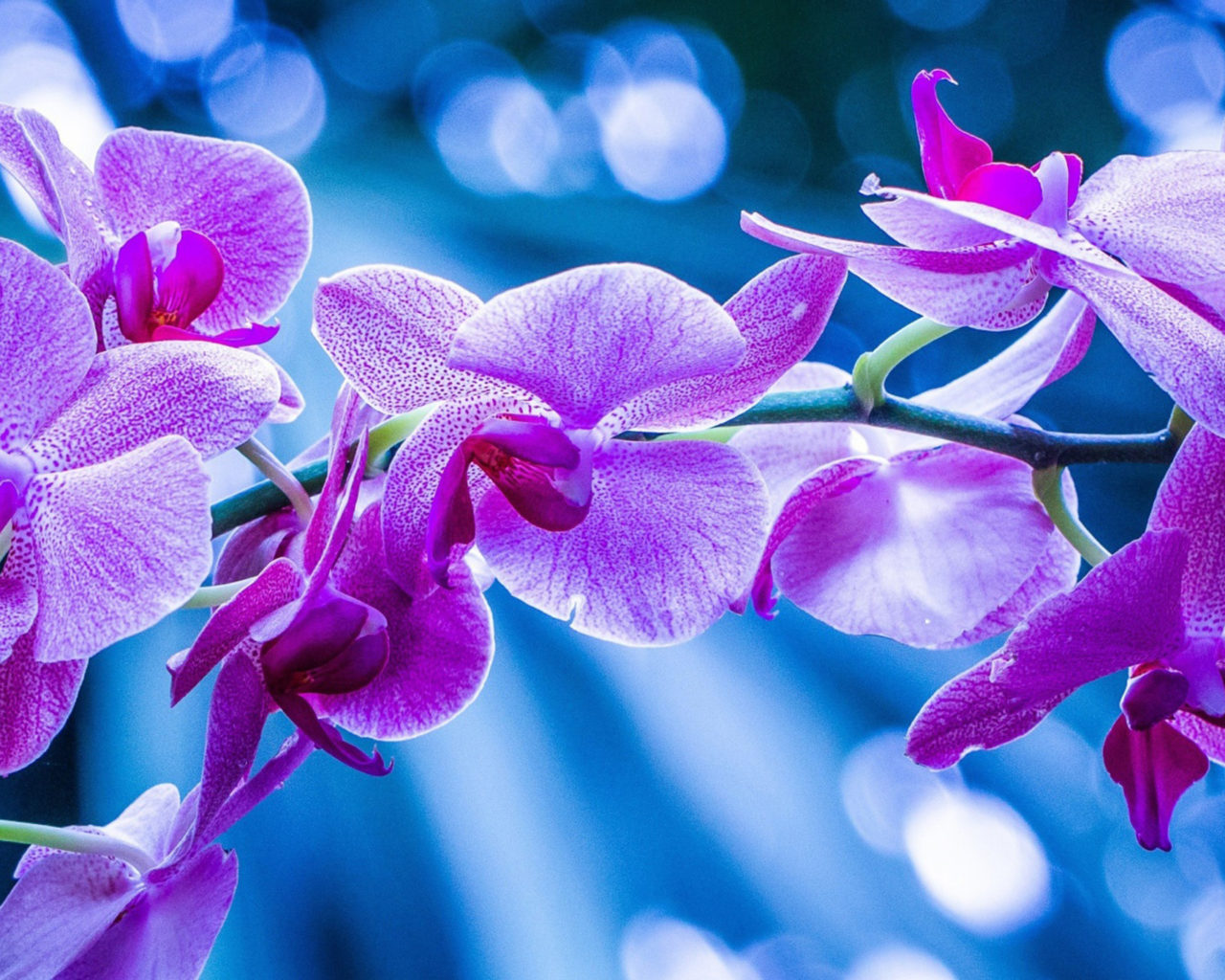 Black Daisy Wallpaper Purple Orchid Flowers Picture Hd Wallpapers 2560x1440