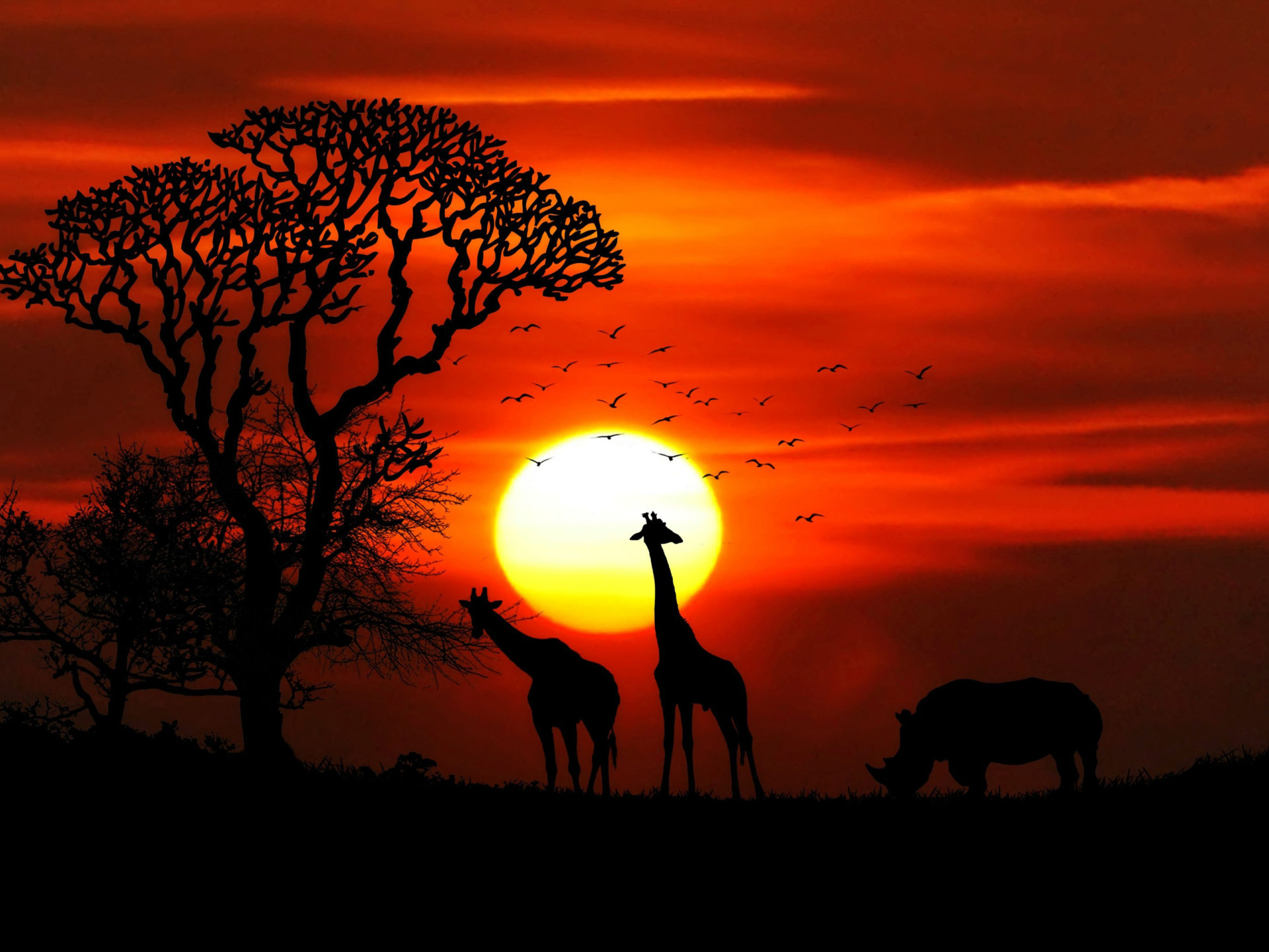 Cars Wallpaper Download For Pc Sunset African Savanna Sun Red Sky Silhouettes Of Tree
