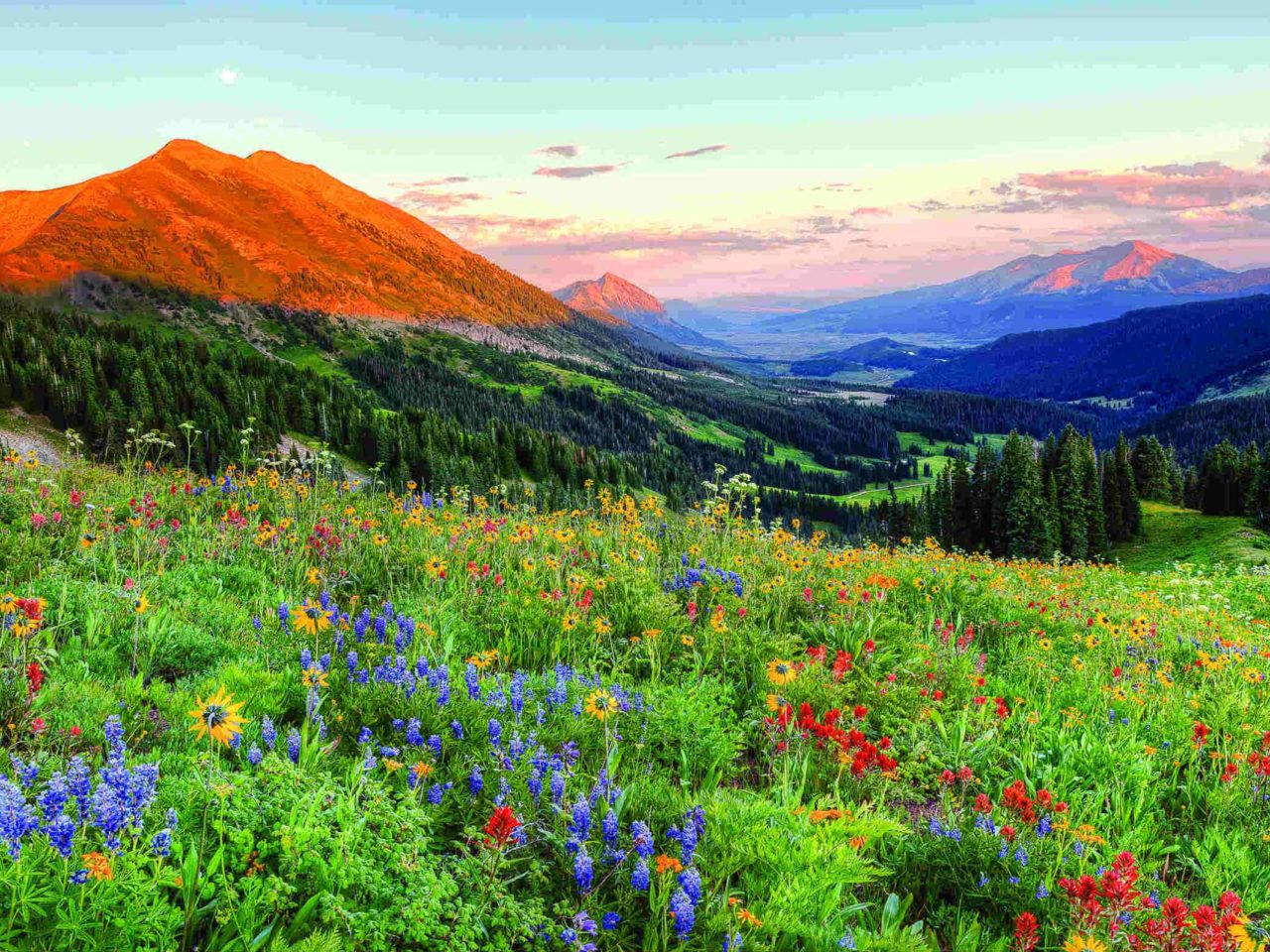 Fall Mountains Iphone Wallpaper Crested Butte Colorado Wild Spring Flowers Landscape