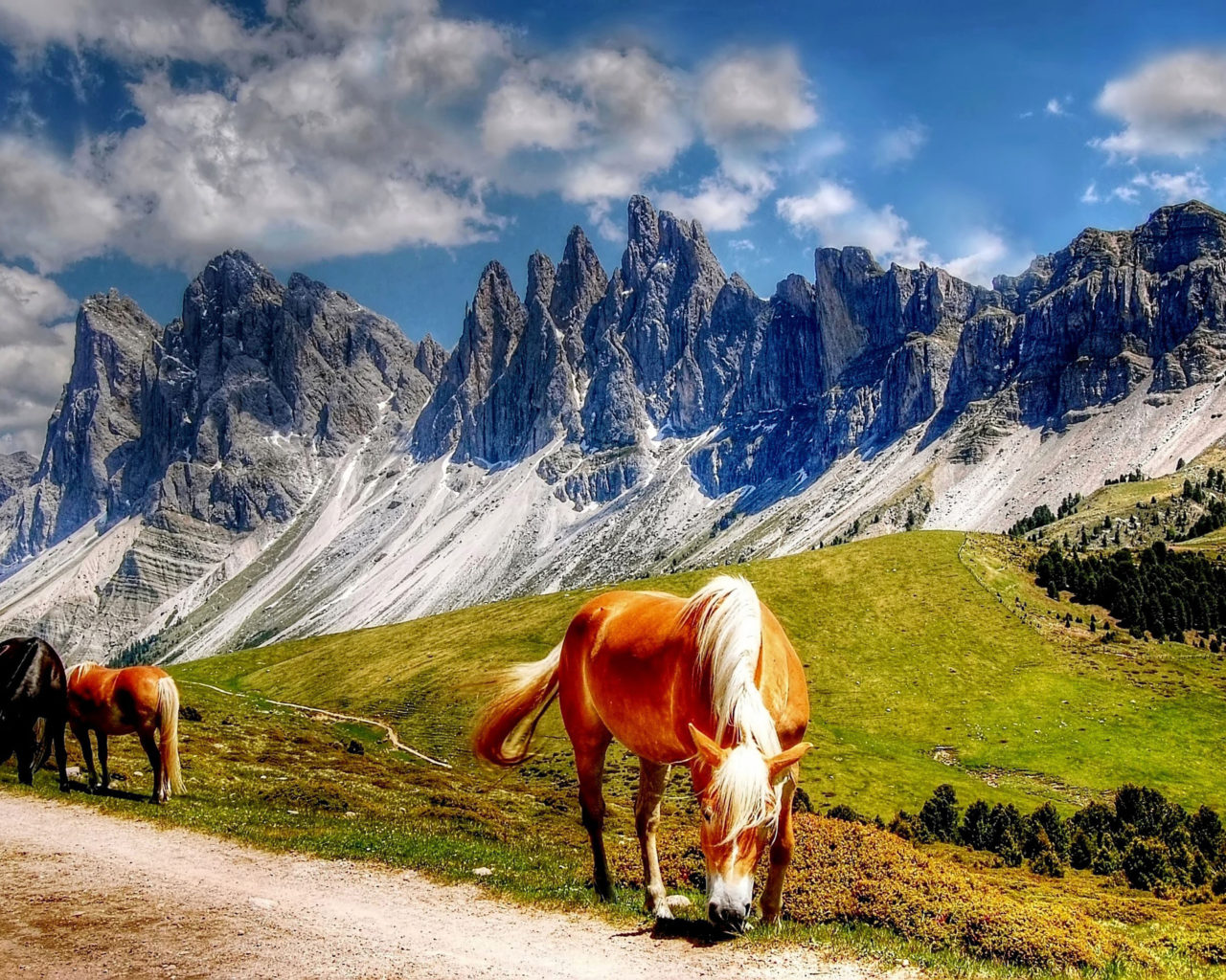 Fall Wallpaper Hd 1366x768 Horses In The Dolomites Mountains Italy South Tyrol
