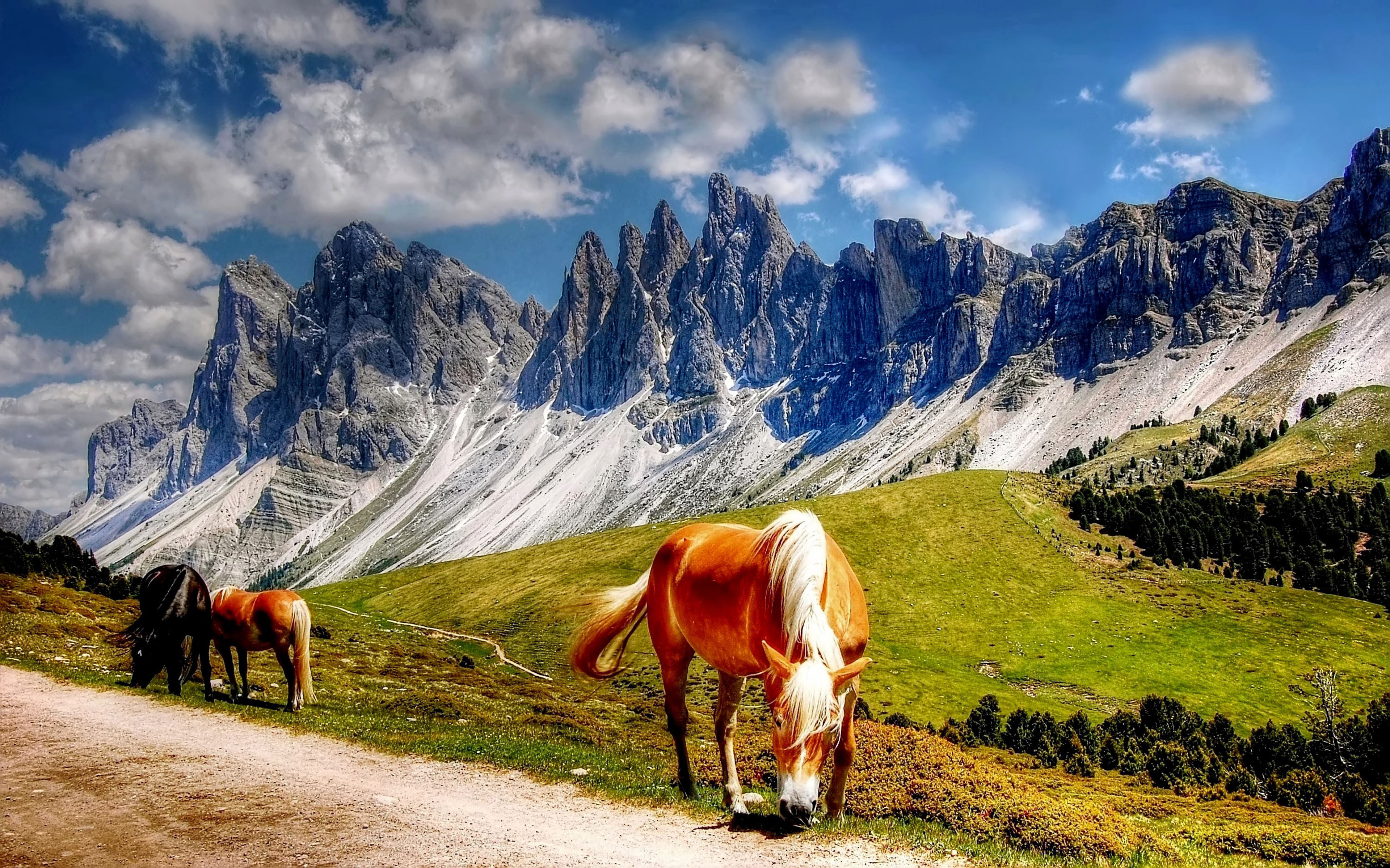 Fall Woodsy Pc Wallpaper Horses In The Dolomites Mountains Italy South Tyrol