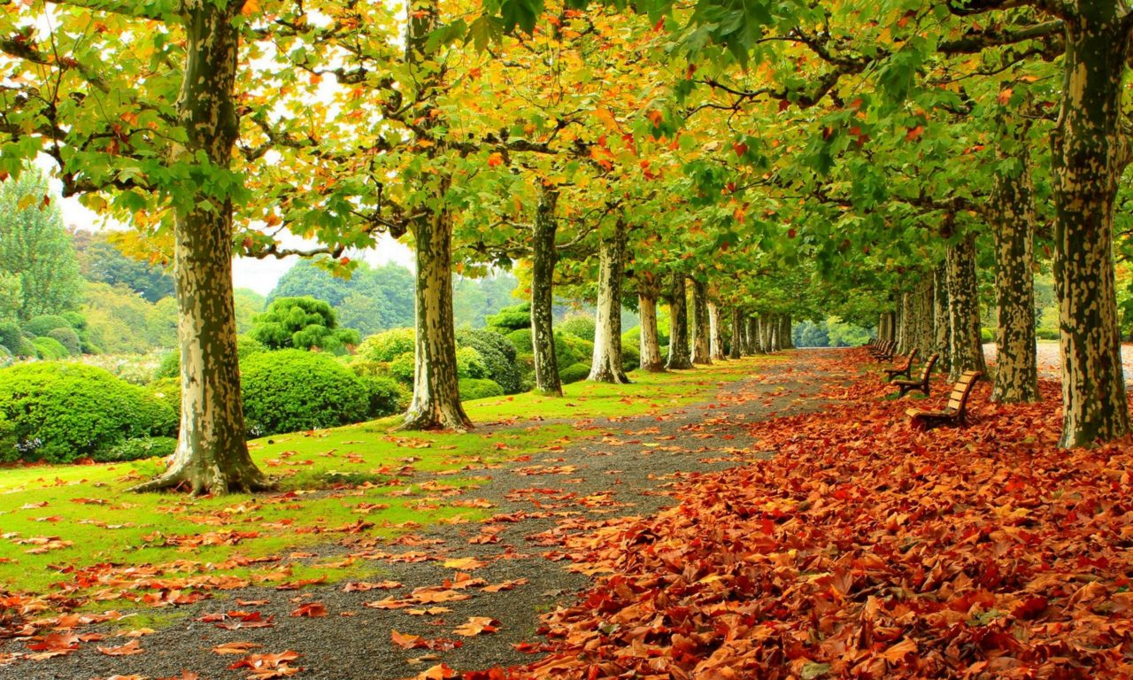 Pink Fall Wallpaper Autumn Fall Deciduous Trees Park Fallen Red Leaves Wooden
