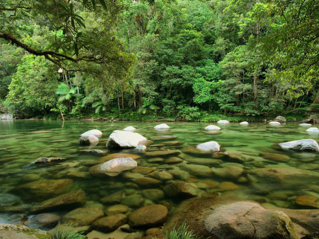 Free Android Fall Wallpaper Daintree National Park Queensland Rainforest Australia