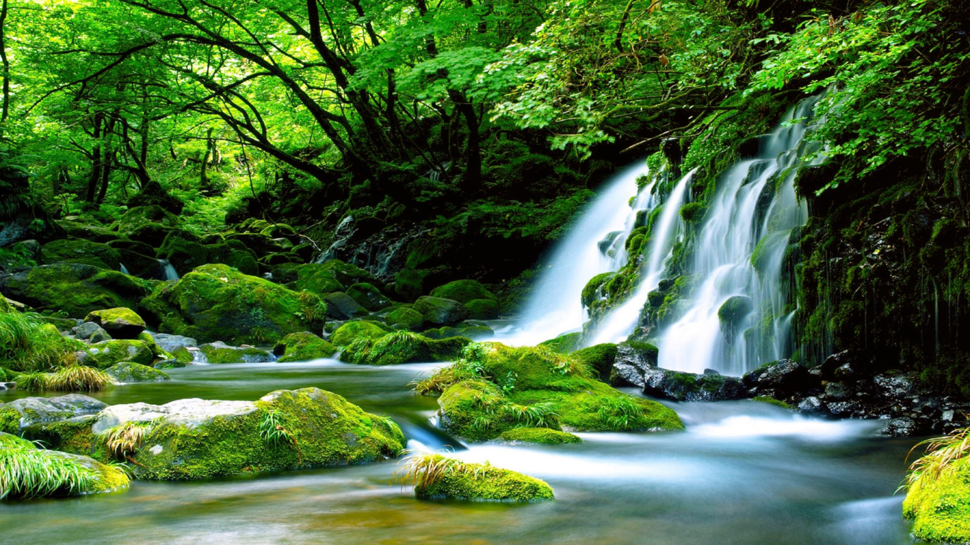 Kuang Si Falls Hd Wallpaper 1920 Green Waterfall River Rocks Covered With Green Moss Forest