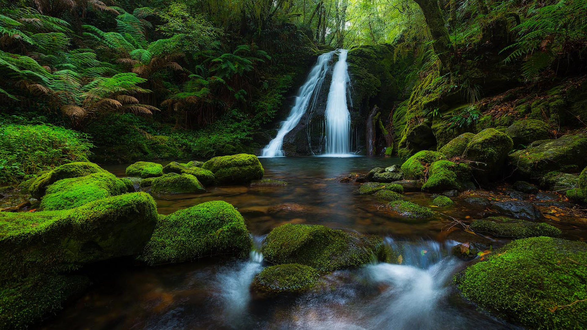 Free Fall Wallpaper For Pc New England National Park Australia Rainforest Waterfall