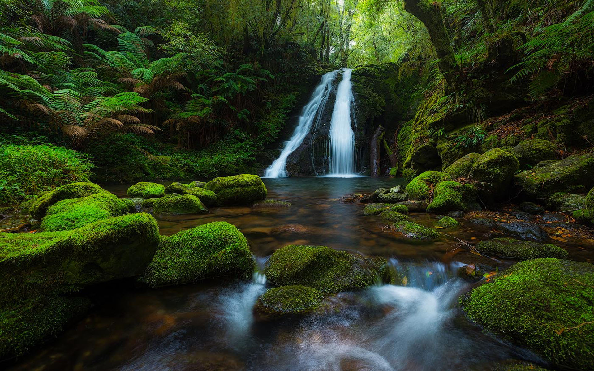 Fall 4k Wallpaper New England National Park Australia Rainforest Waterfall
