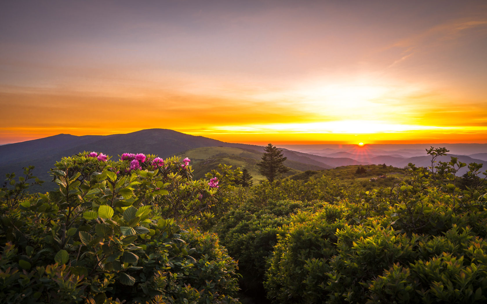 Kangaroo Wallpaper Hd Sunset Rhododenrons Blooming View From Roan Mountain To