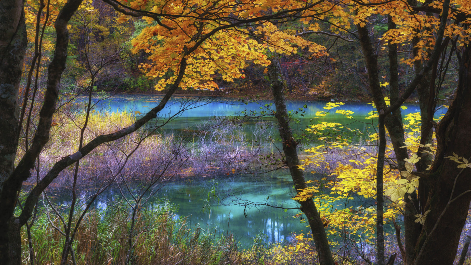 Pc Fall Wallpapers Blue Lake Goshikinuma Fukushima Japan Autumn Scenery