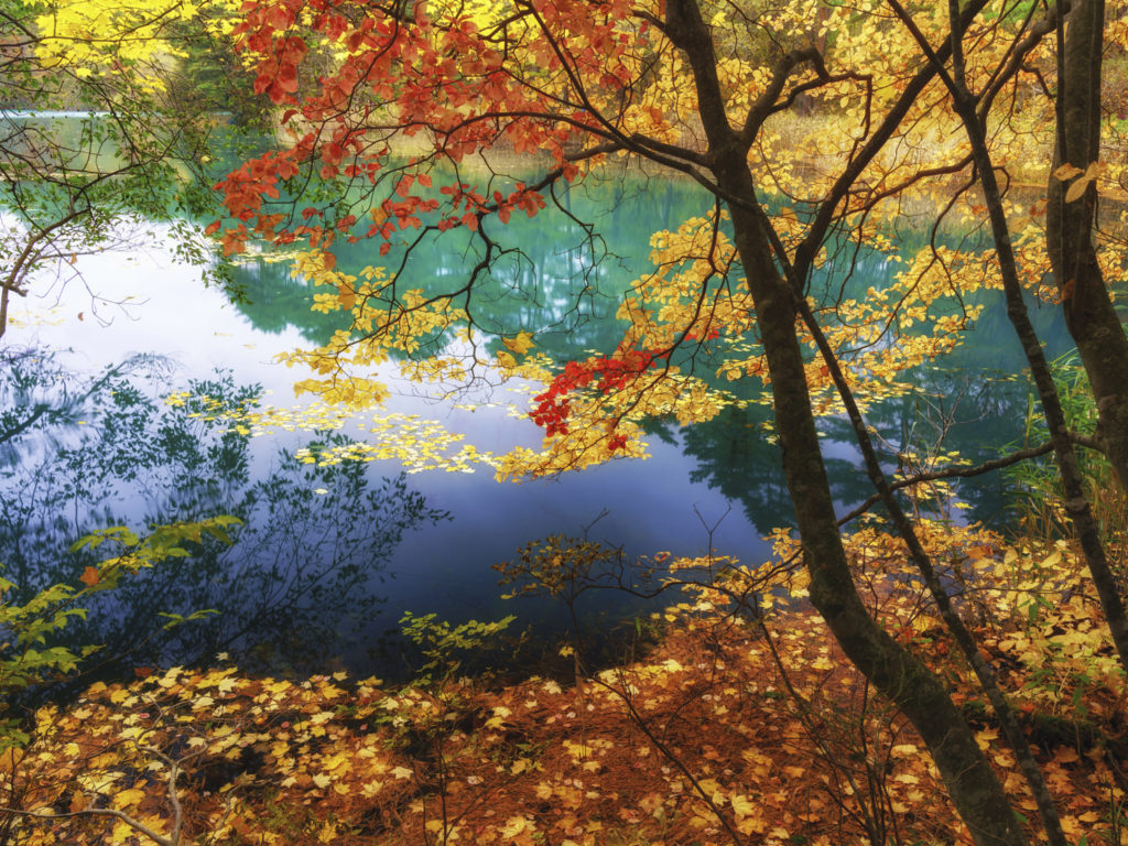 Fall Trees Desktop Wallpaper Lake Goshikinuma Fukushima Japan The Color Of Autumn Trees