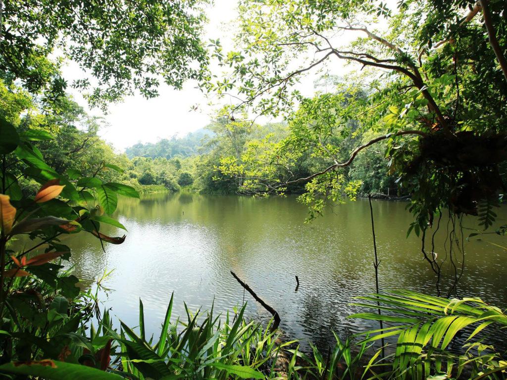 1920x1080 Fall Hd Wallpaper Trophic Landscape Jungle River Lake Water Rain Forest Lush
