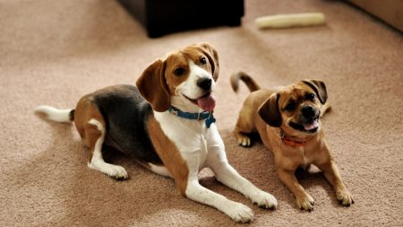 Cute Wallpapers 1080p Beagles Download Wallpaper 1920x1080 Puppies Waiting Dogs Full