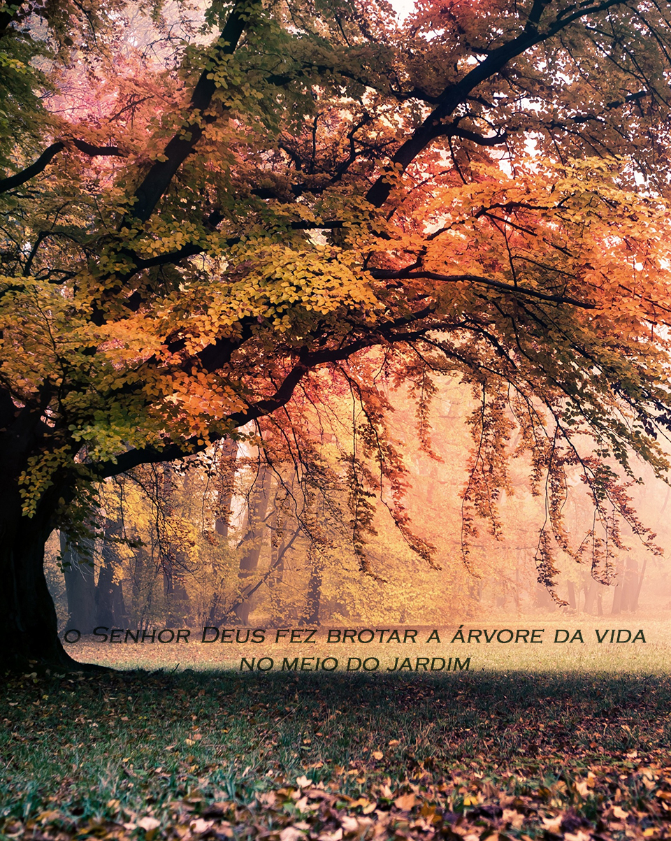 Fall Evening Wallpapers A 193 Rvore Da Vida Wallpapers Crist 227 Os