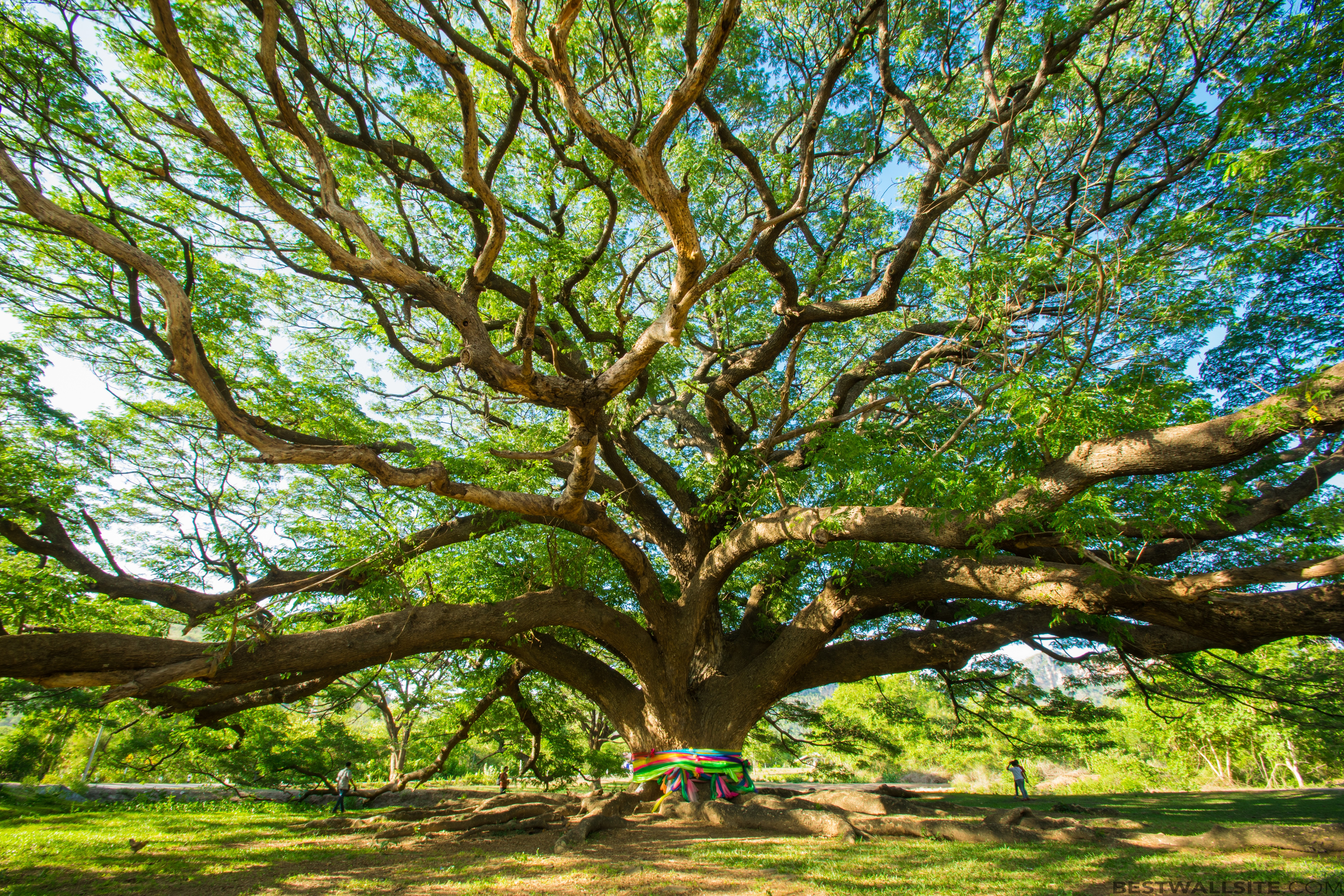Animated Hd Wallpapers 1080p Free Download Download Amazing Tree Wallpaper Gallery