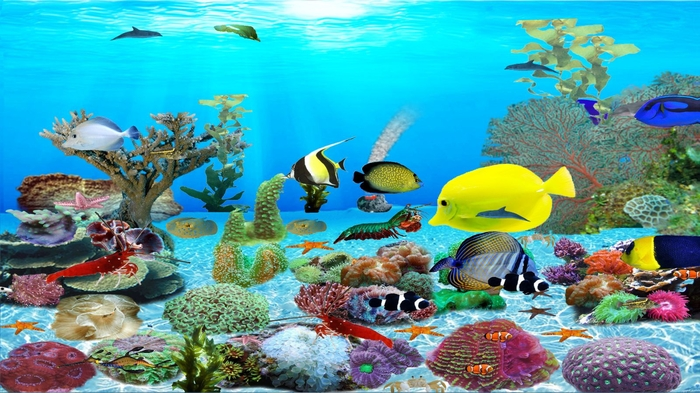 3d Live Wallpaper For Pc Windows 7 Free Download Download Animated Aquarium Wallpaper For Windows 7 Free