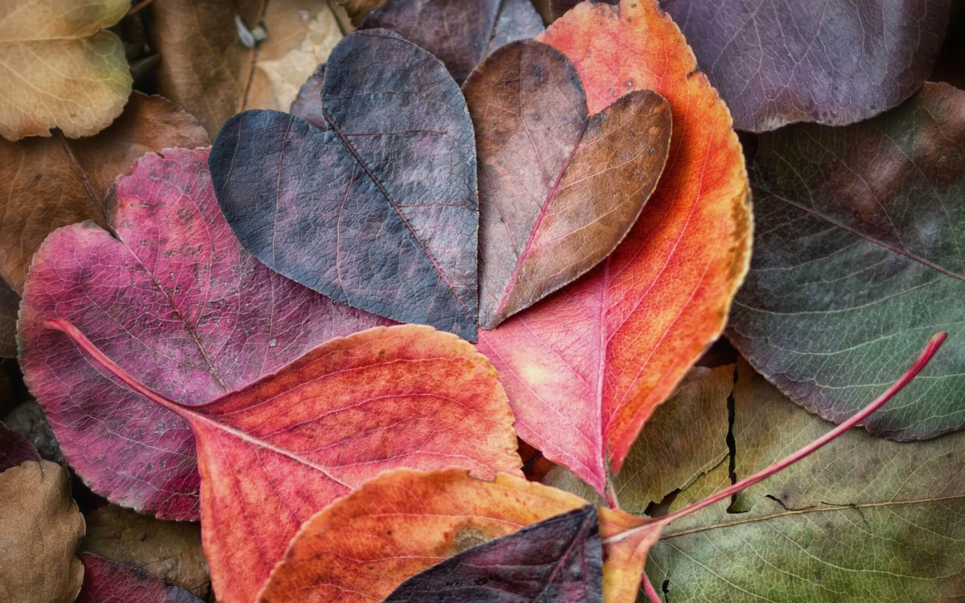 Free Computer Wallpaper Backgrounds For Fall Download Autumn Love Wallpaper Gallery