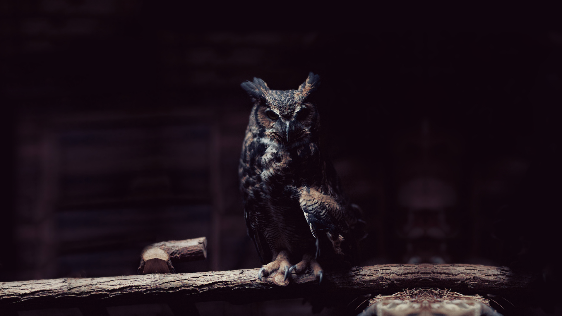 Boy Smoking Wallpapers Quotes Download Black Owl Wallpaper Gallery