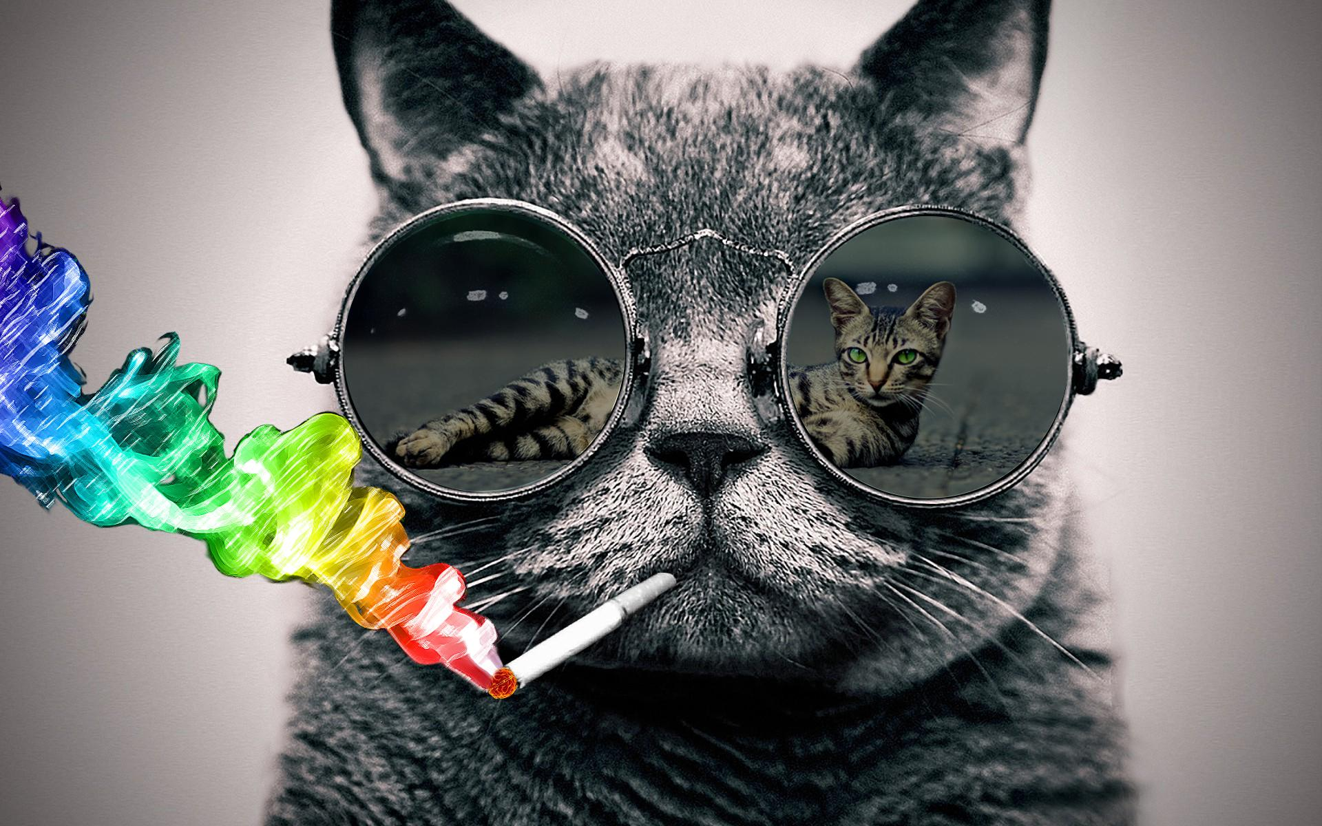 3d Christmas Live Wallpaper For Windows Download Cat With Sunglasses Wallpaper Gallery