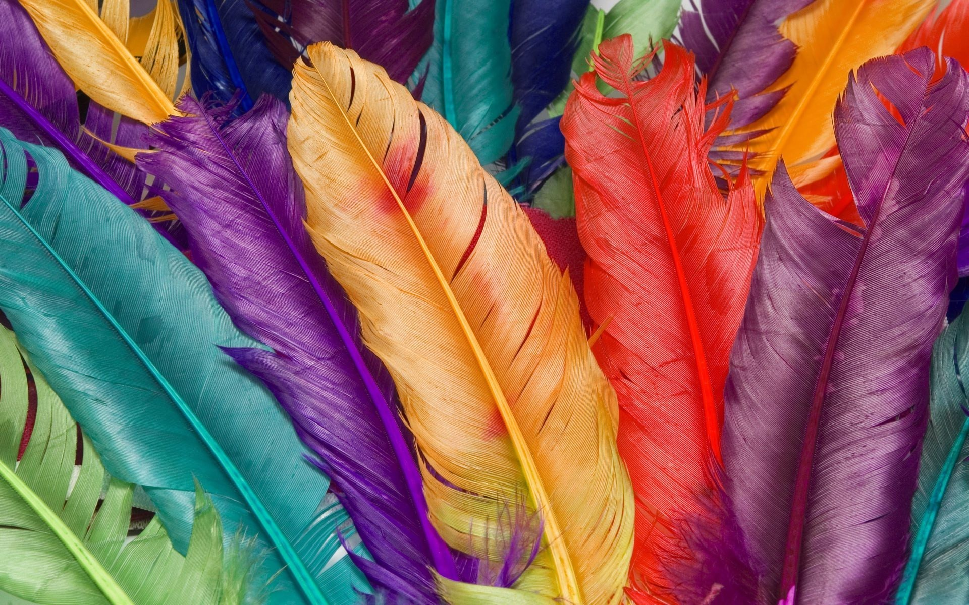 Scary 3d Live Wallpaper Download Colorful Feather Wallpaper Gallery