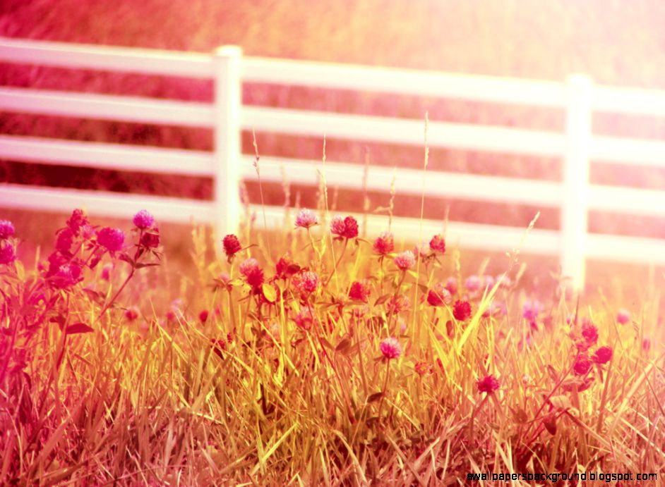 Free Download Most Beautiful Girl Wallpaper Download Country Summer Wallpaper Gallery