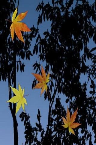 Fall Leaf Wallpaper For Mobile Download Fall Leaves Live Wallpaper Gallery