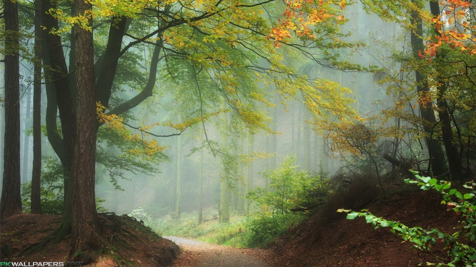 3d Heart Wallpaper Backgrounds Download Fantastic Nature Wallpapers Gallery