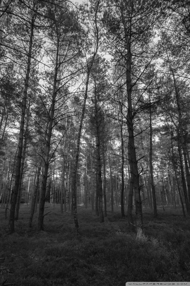 3d Parallax Live Wallpaper Free Download Download Forest Wallpaper Black And White Gallery
