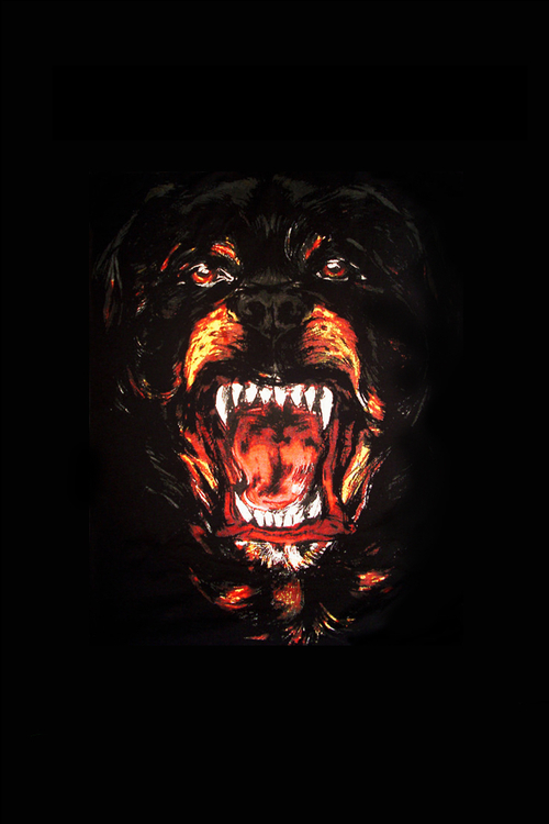 Fall Live Wallpaper Android Download Givenchy Dog Wallpaper Gallery