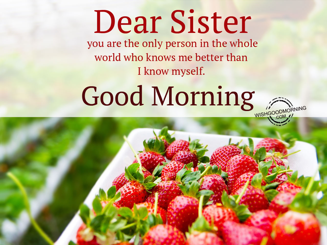 Lovely Wallpapers With Quotes In Hindi Download Good Morning Sister Wallpaper Gallery