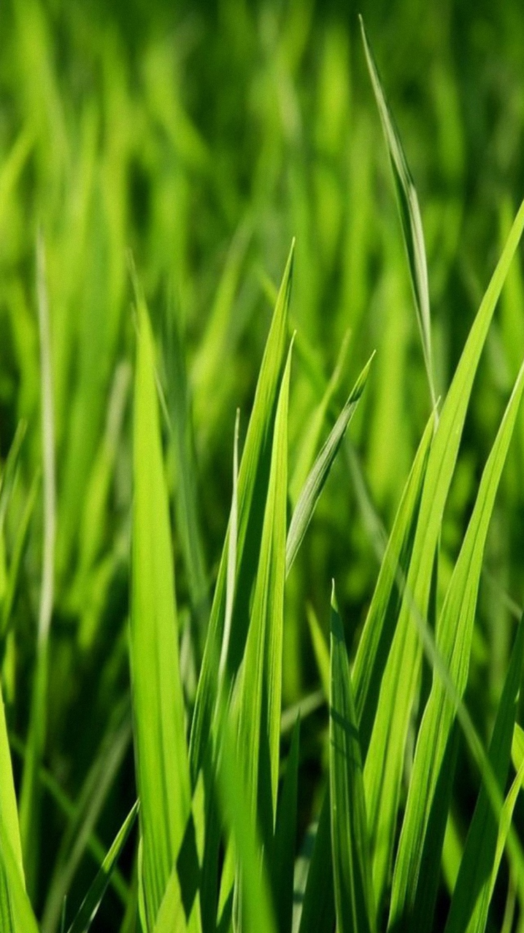 3d Live Wallpaper Hd For Android Download Green Grass Wallpaper Hd Gallery