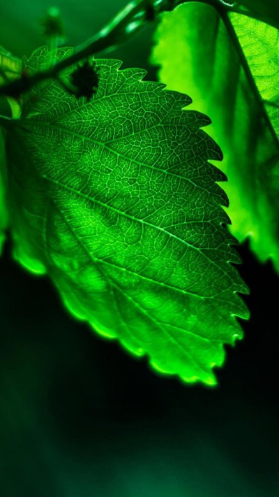 Download Green HD Iphone Wallpapers Gallery