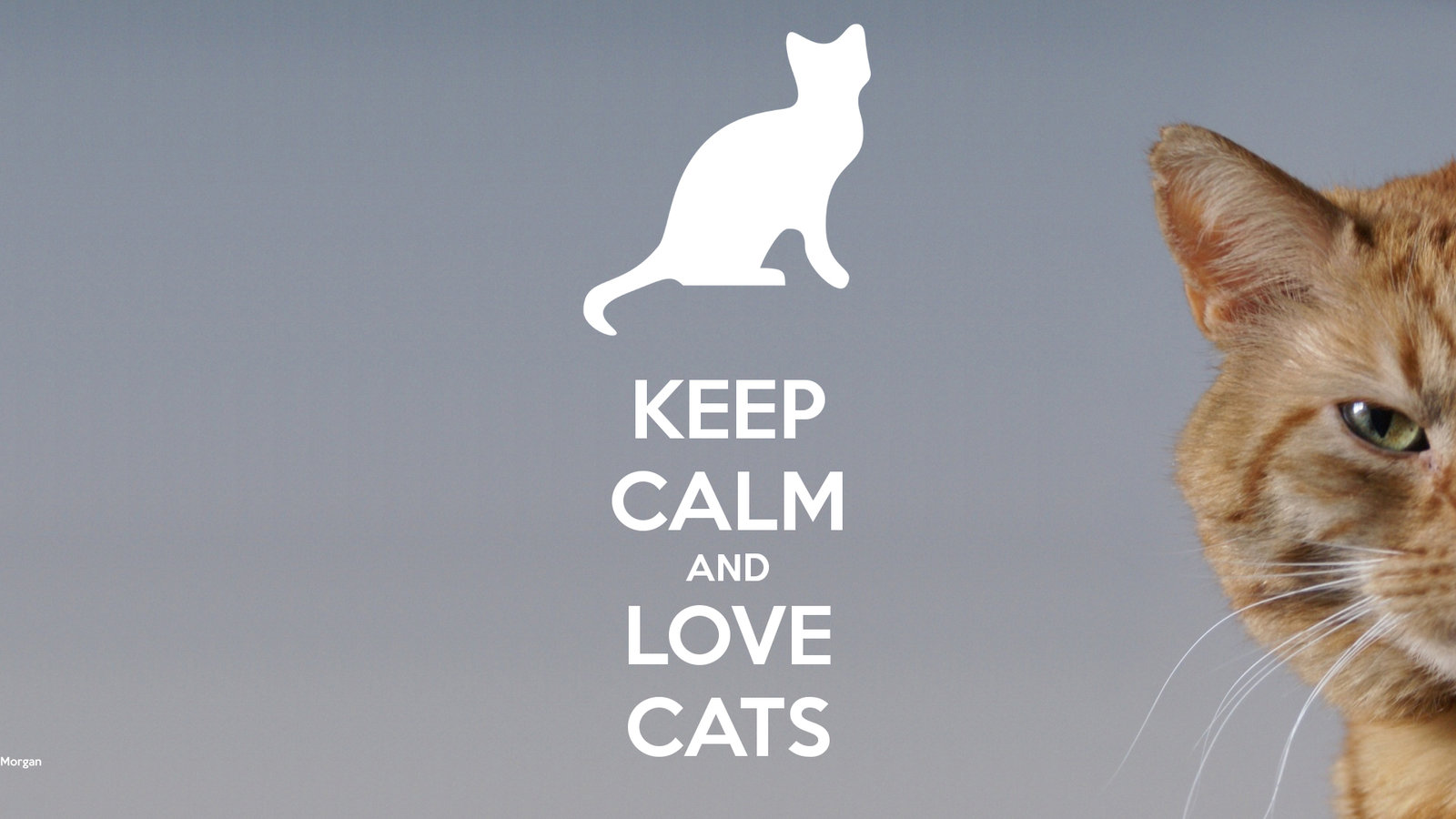 Cute Home Screen Wallpaper For Android Download I Love Cats Wallpaper Gallery