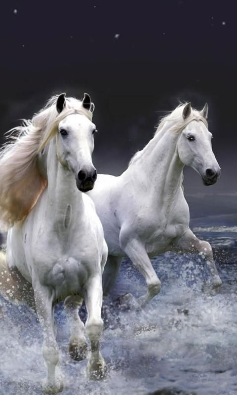 White Wave 3d Wallpaper Download Live Horse Wallpaper Gallery