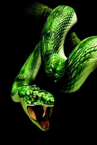Download Live Snake Wallpaper Gallery