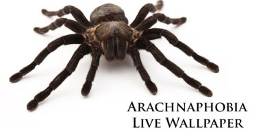 Download Live Spider Wallpaper Gallery