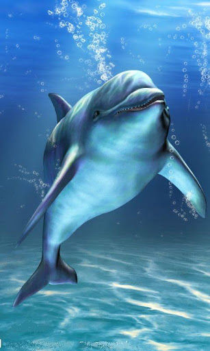 Download Live Wallpaper Dolphins Gallery