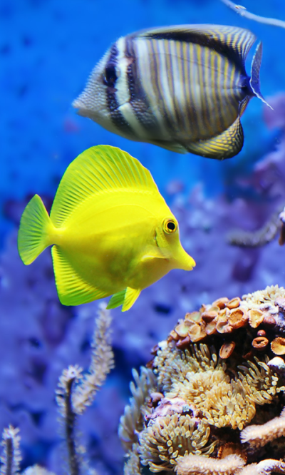 Download Live Wallpapers Fish Gallery