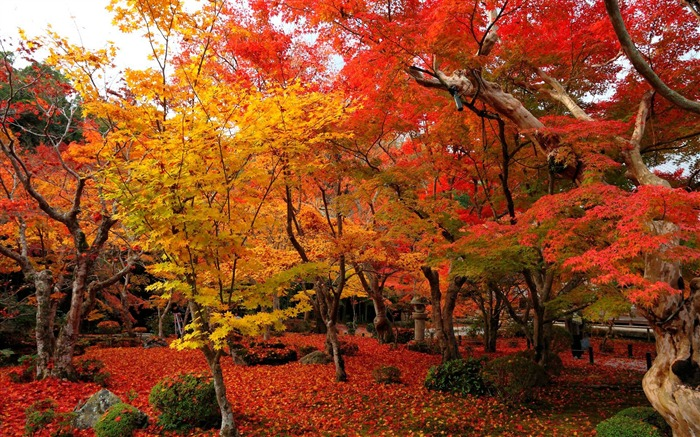 3d Live Moving Wallpaper Download National Geographic Autumn Wallpaper Gallery