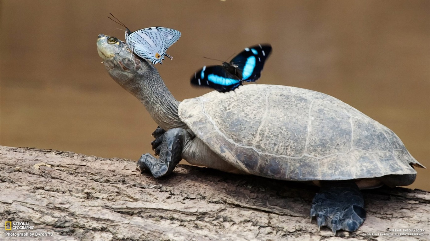 Love Cute Couple Wallpaper Download Download National Geographic Wallpaper Of The Day Gallery