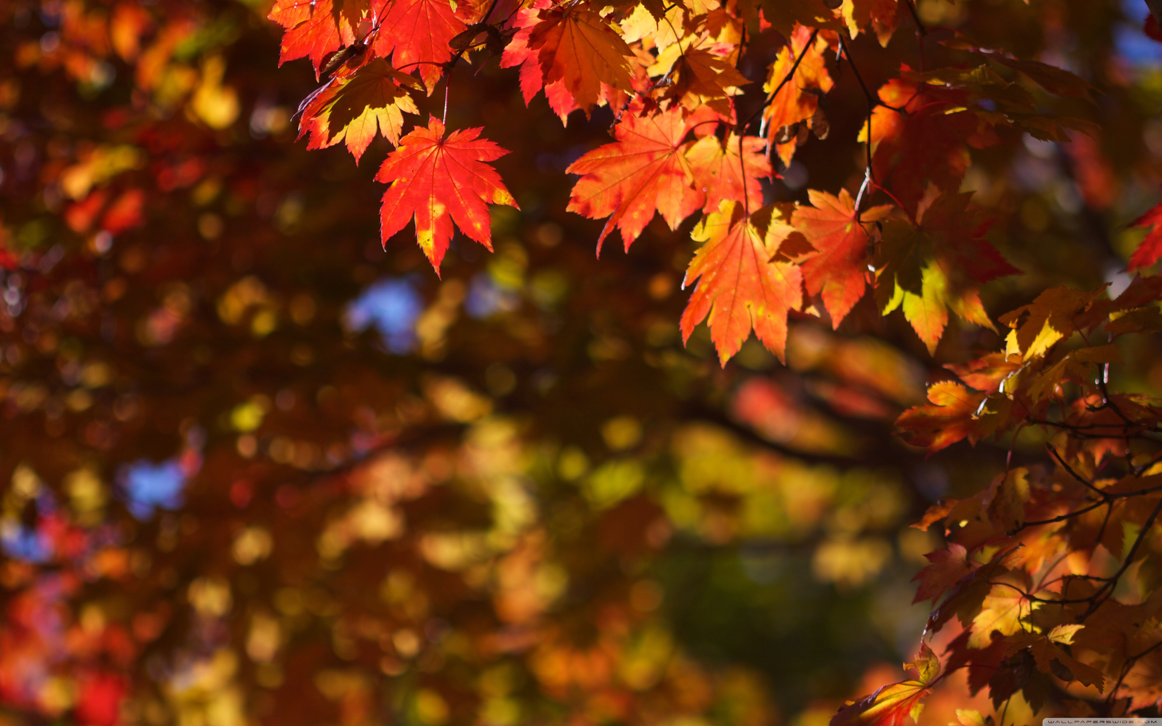 Free Animated Fall Wallpaper Download Bing Animated Wallpaper Gallery