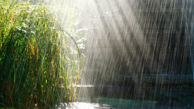 Download Rainy Wallpapers Nature Gallery