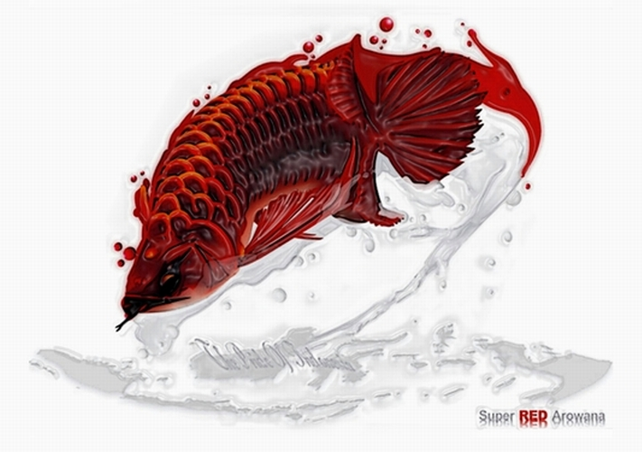 Cute Cartoon Horse Wallpaper Download Red Arowana Wallpaper Gallery