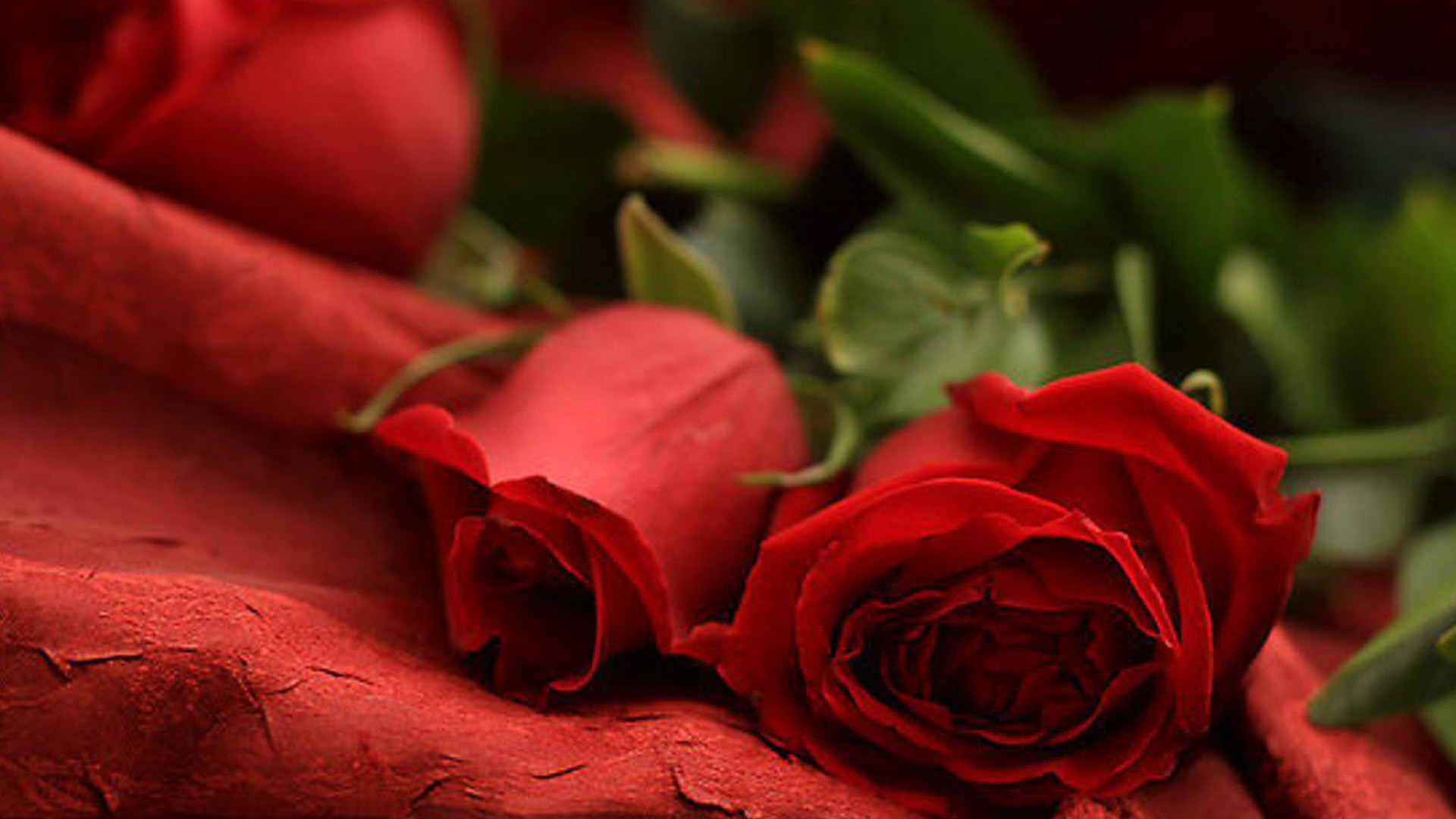 3d Live Animated Wallpaper Download For Windows 7 Download Romantic Red Roses Wallpaper Gallery