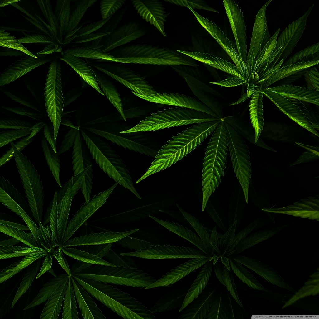 The Yellow Wallpaper Quotes About John Download Weed Wallpapers For Android Gallery