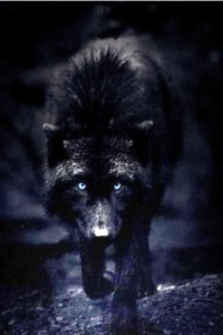 Wolf Wallpaper Iphone Download Wolf Wallpaper Iphone Gallery
