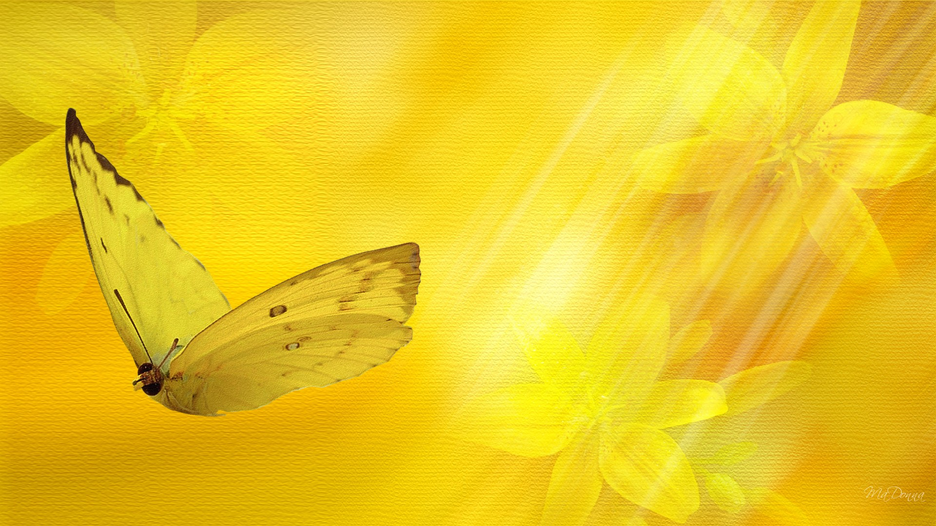 Butterfly 3d Live Wallpaper Free Download Download Yellow Nature Wallpaper Gallery