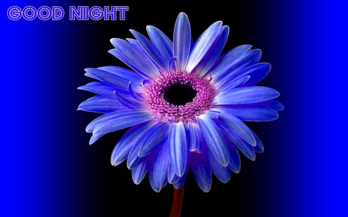 96 Nice Flowers Images With Good Night Good Night Images Download