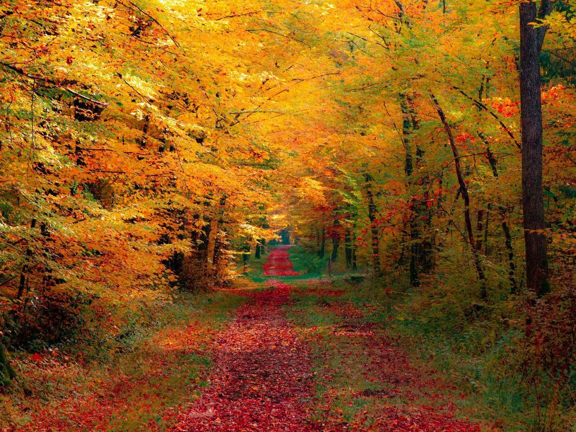 Fall Wallpaper Iphone 6 Plus Autumn Trees Wallpaper 4k Hd Wallpaper Background