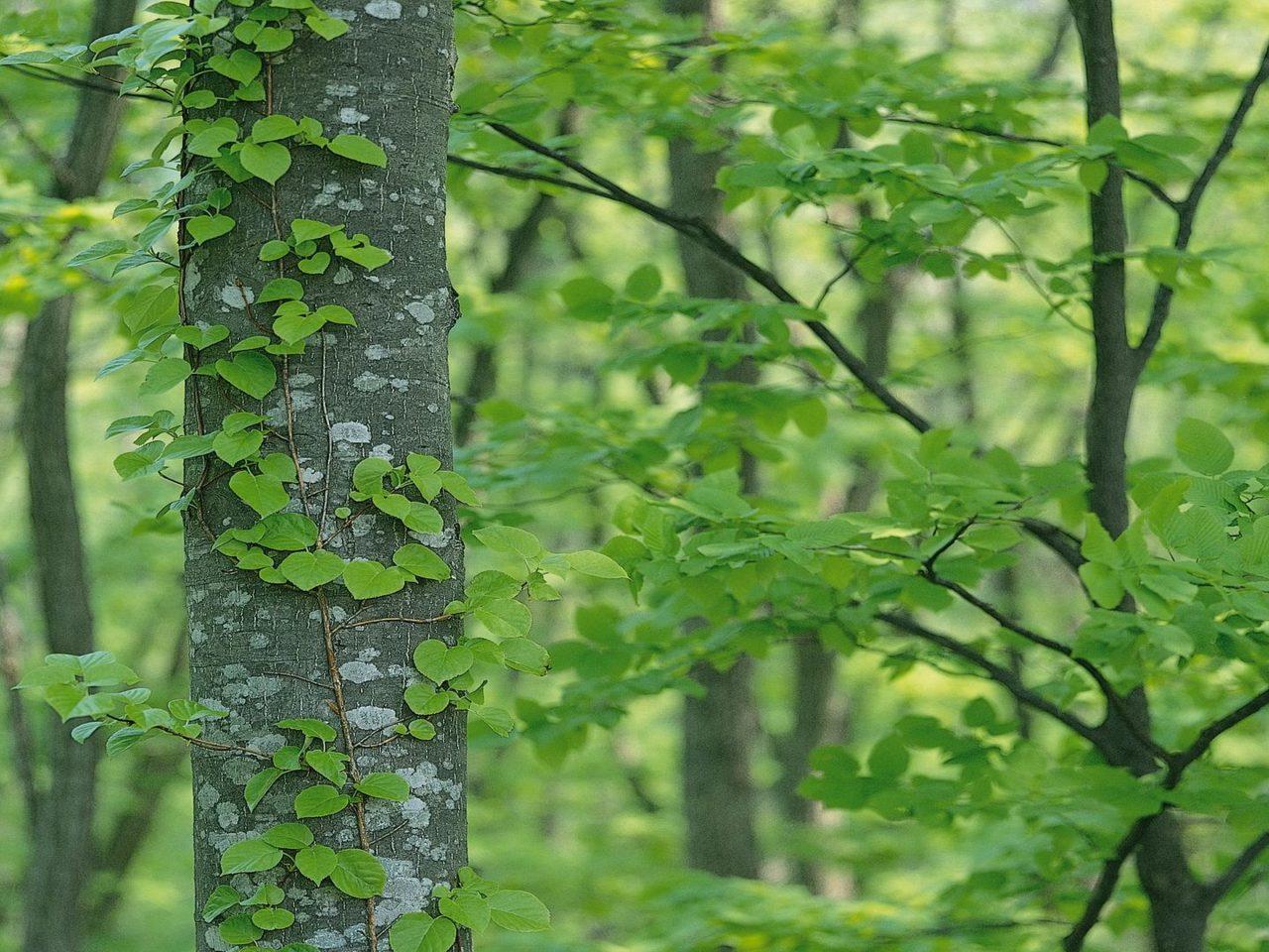Purple Iphone 5 Wallpaper Green Tree Wallpaper 4k Hd Wallpaper Background