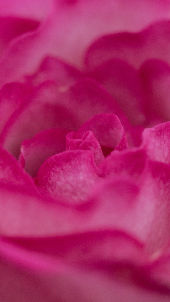 Pink Iphone 6 Wallpaper Pink Flower Wallpaper 4k Hd Wallpaper Background